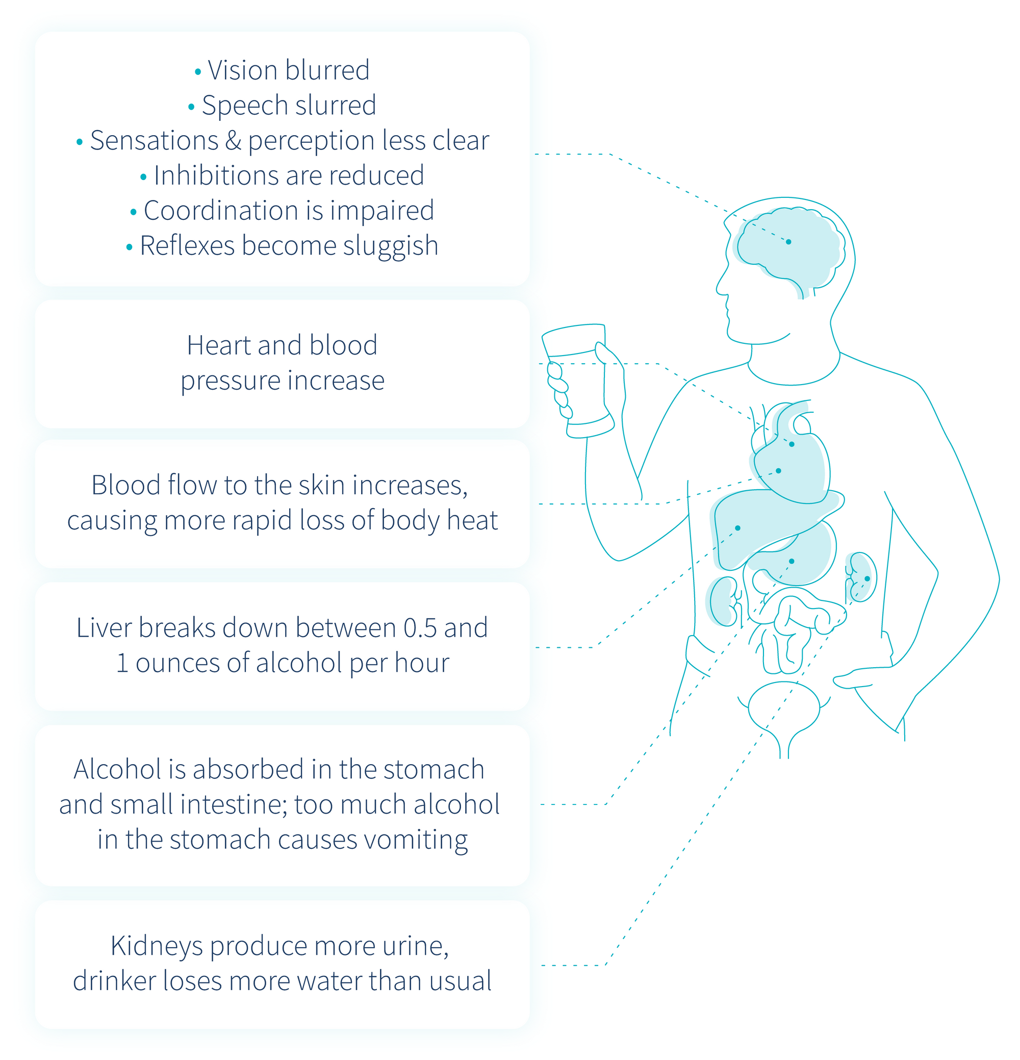 effects-of-alcohol-on-your-health-descriptive-diagram