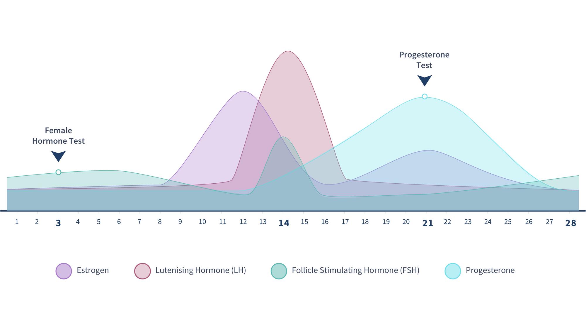estrogen-when-should-you-take-a-fertility-test-graph-2