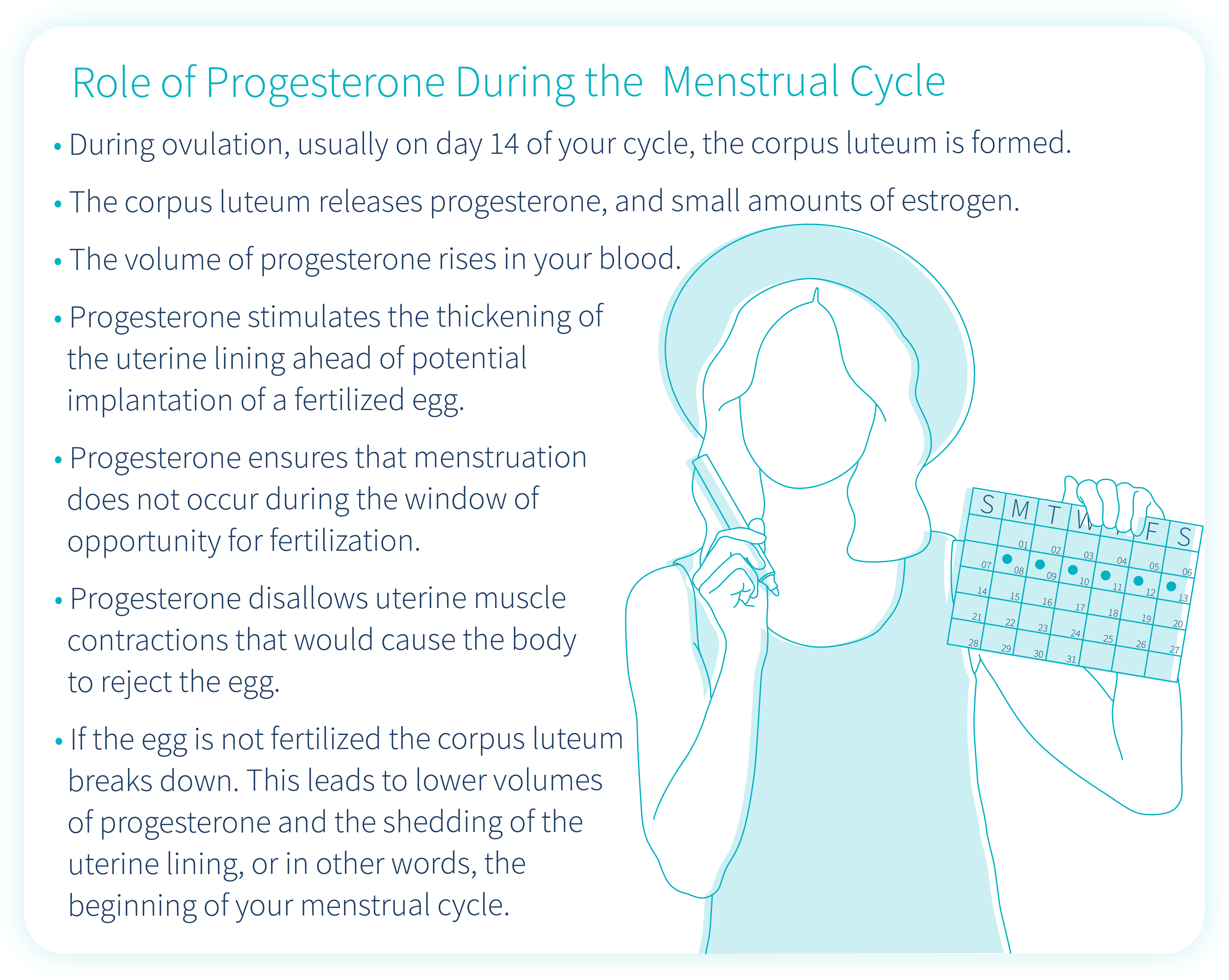role-of-progesterone-during-the-menstrual-cycle
