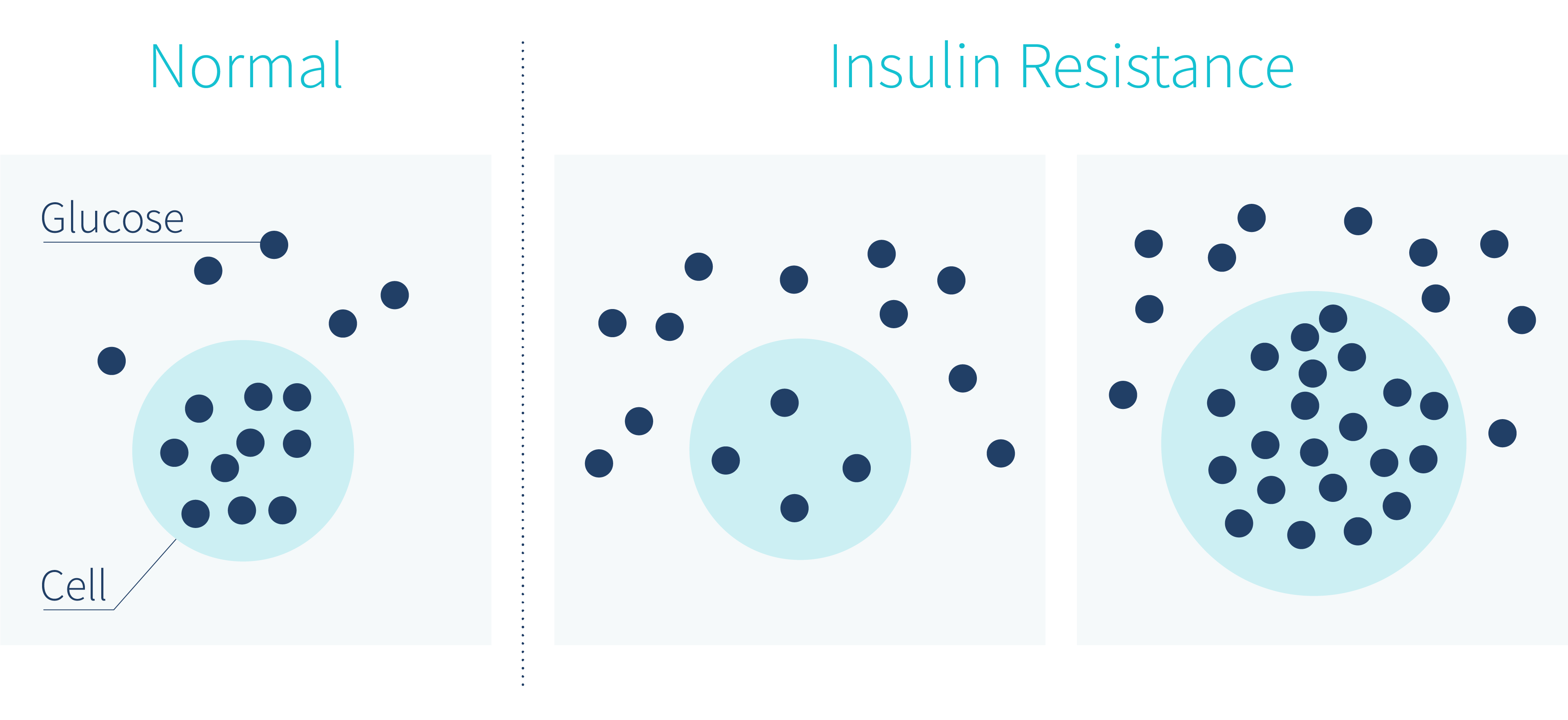 What-Does-Insulin-Resistance-Look-Like